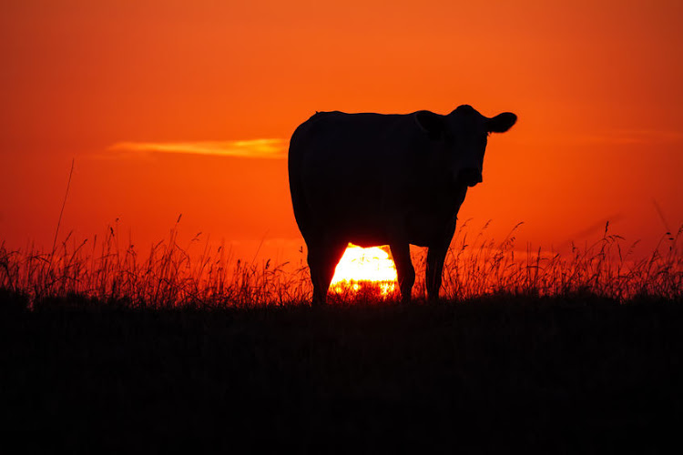 Nearly 250 animals have died at six experimental farming facilities in the Eastern cape in a year. Stock photo.