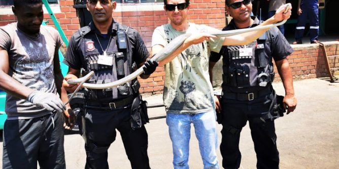 Members of Reaction Unit SA and snake catcher Jason Arnold removed a 2.4m black mamba from a factory in Durban.